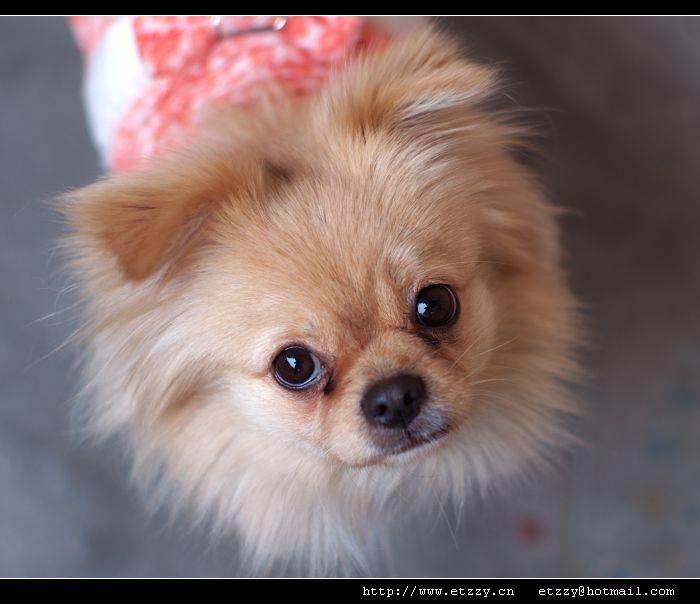 雅西卡50 /1.4拍我的小狗