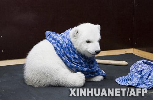 快乐的小北极熊