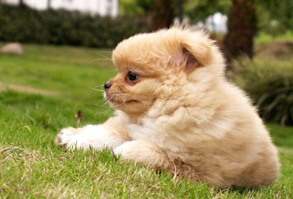 """我的小狗""""贝塔"""""""
