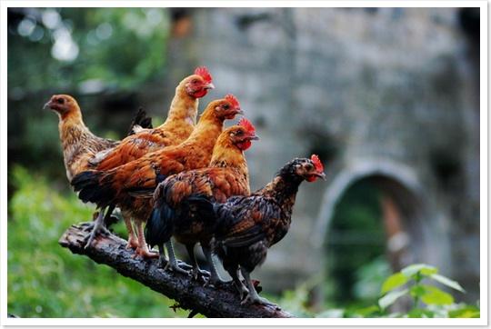 公鸡和母鸡之间--2008岁末最具技术含量文章