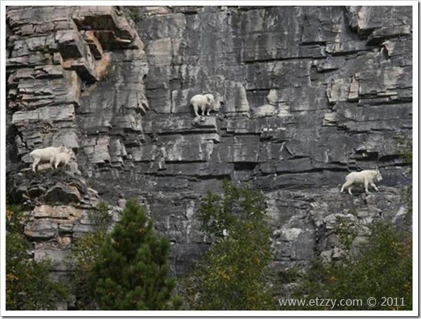 bucks_climbers_5