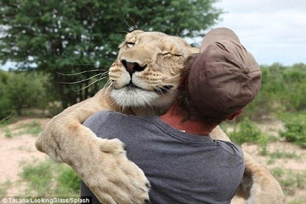 这只家养的母狮子,最近学会了野外捕食