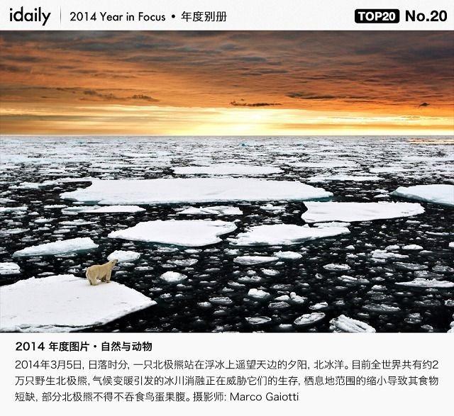 『iDaily』2014 全球年度图片:自然与动物 Top 20