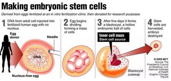 你看见的干细胞产品大部分都是假的