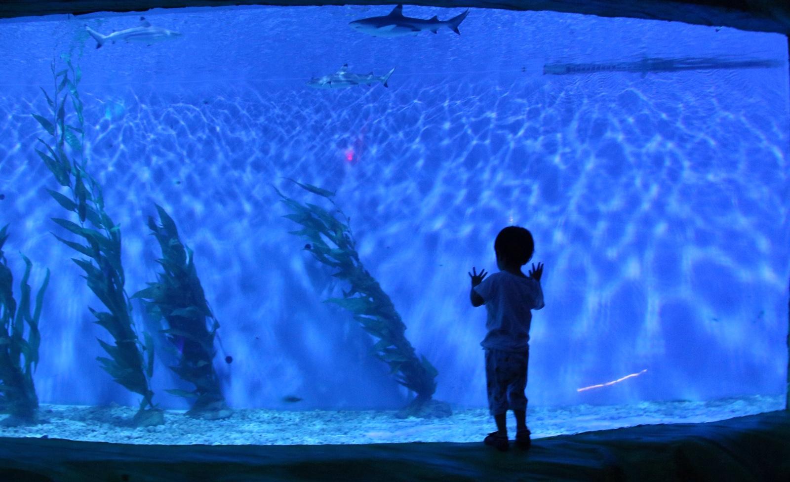欧乐堡海洋世界~面对神秘的大海
